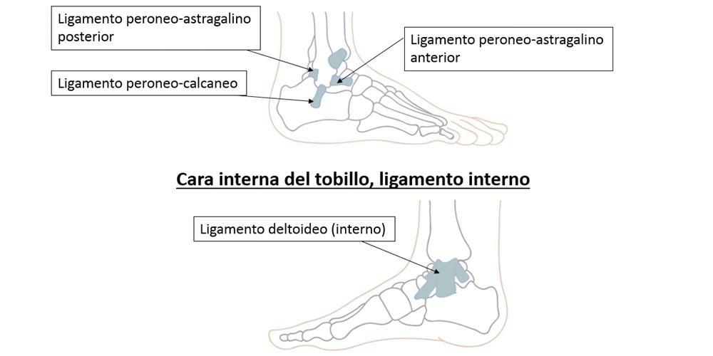 Esguince lateral de tobillo :: Sociedad Argentina de Medicina y ...